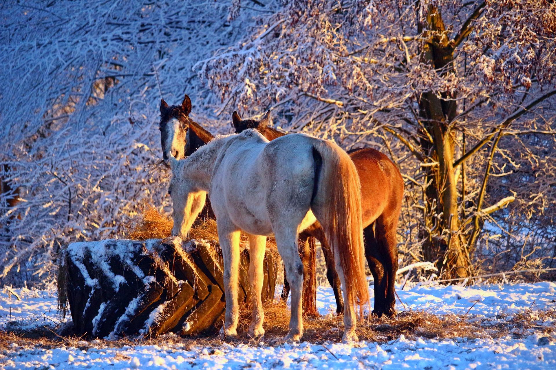 prendre soin du cheval en hiver