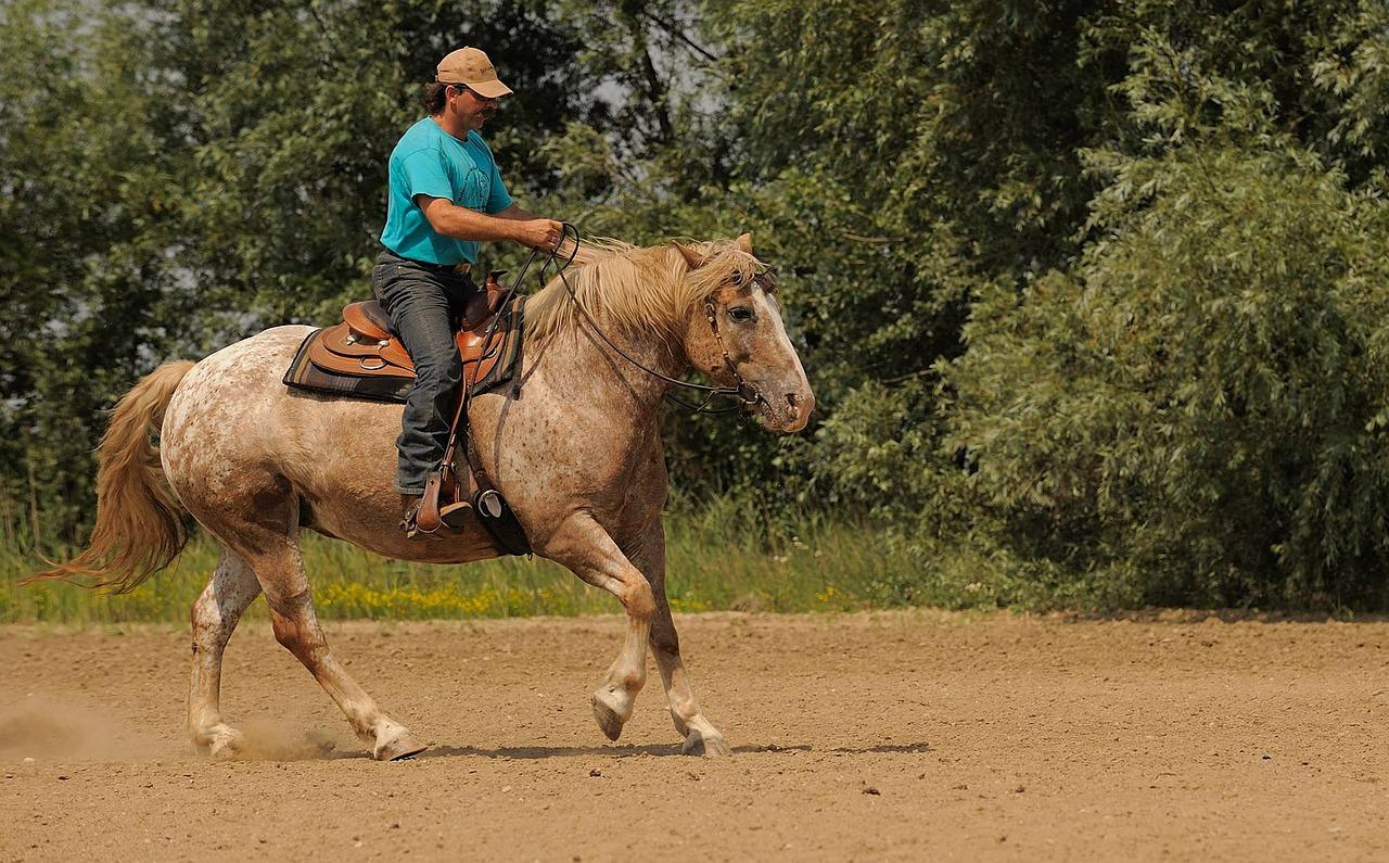 prendre soin de son cheval