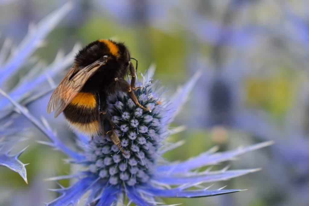nourrir les abeilles